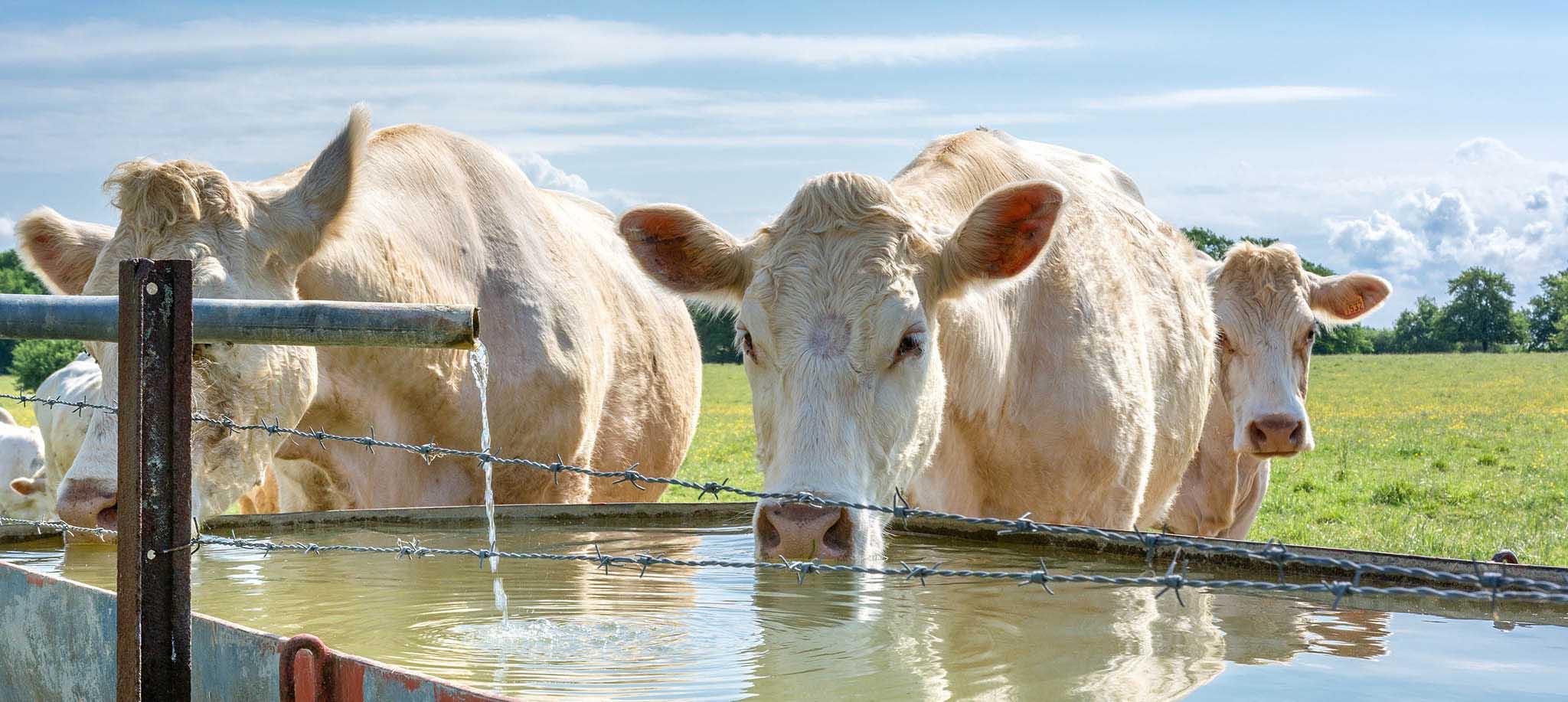 Récupération eau de pluie élevage